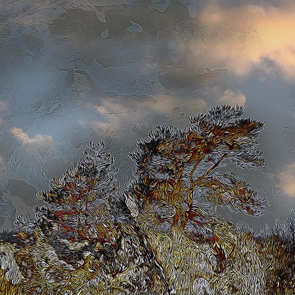 Winter Night In The Forest Art | Maciek Peter Kozlowski Art