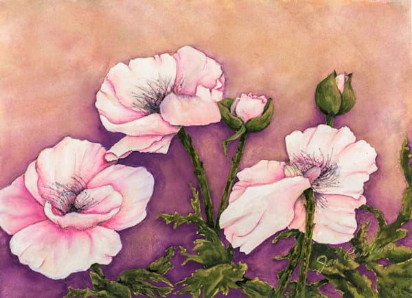 Poppies No1 Art | capeanngiclee