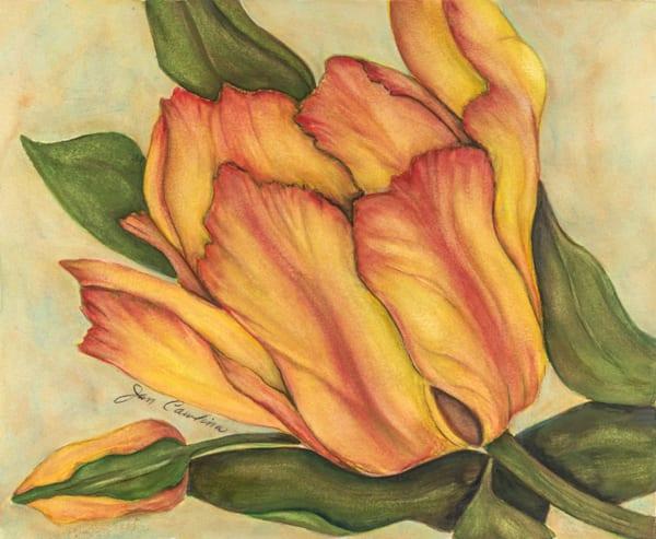 Tulip Art | capeanngiclee