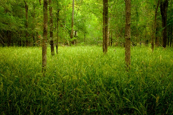 Forest Near Gonzales, Texas Photography Art   Rick Gardner Photography
