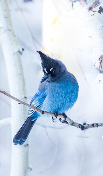 Winter Jay Photography Art | Colorado Born Images
