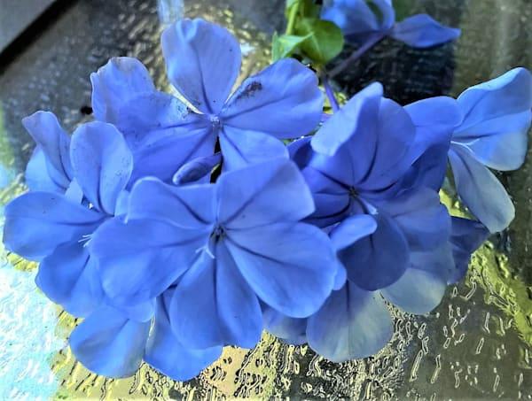 Blue Flower Art | GGRGA INNOVATIVE SOLUTIONS LLC