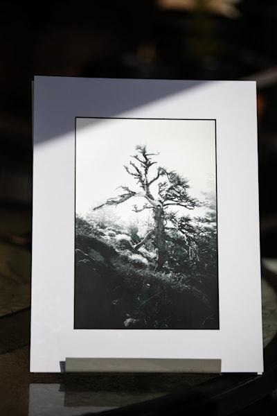 """Bristlecone Pine"" 8x12 Matted Metallic Print | Sydney Croasmun Photography"