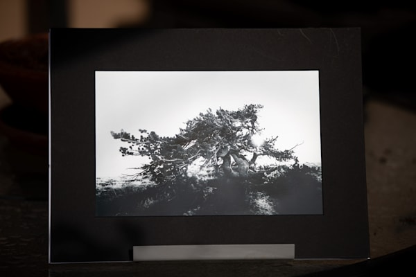 """Reaching"" 8x12 Matted Metallic Photo Print | Sydney Croasmun Photography"