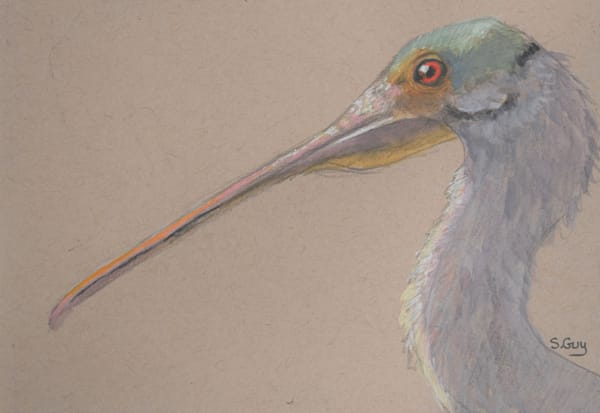 Spoonbill Side View  Art | Sharon Guy