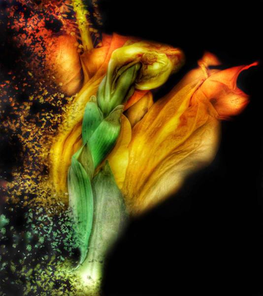 Confetti Tulip ~ Print Art   Chatt Hills Artist Co-op, LLC