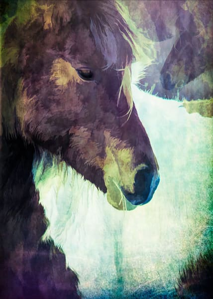 Horse Obsession