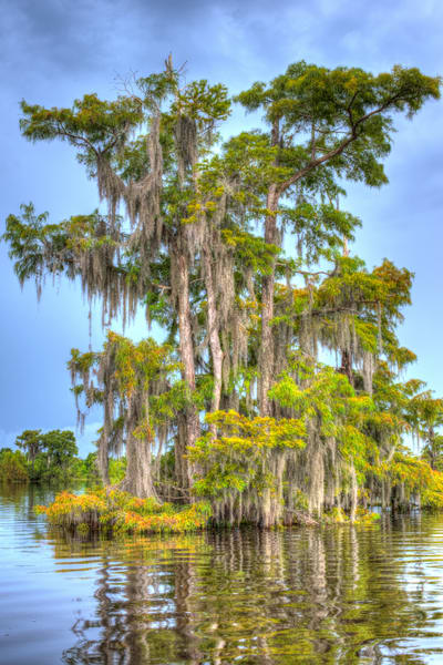Old Florida Cypress Art   Modus Photography