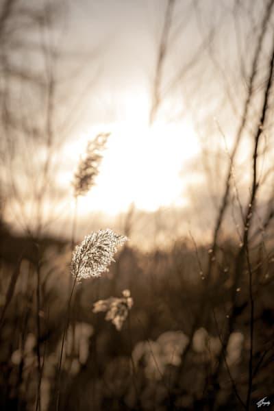 Quiet Afternoon Art | TG Photo