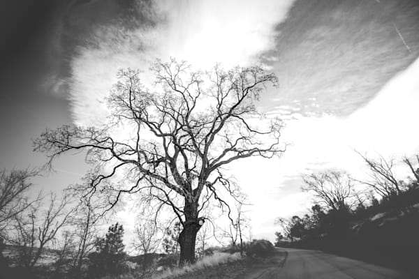 Roadside Valley Oak Photography Art | Sydney Croasmun Photography