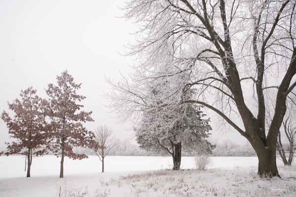 Snowy Trees 2, 2021
