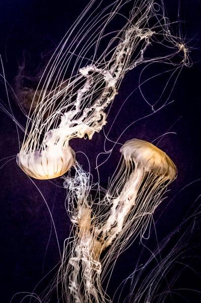 Jellyfish Art | Light Pixie Studio