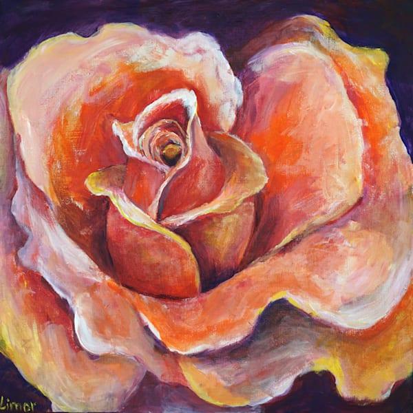 Peach Rose Print Art | Limor Dekel Fine Art