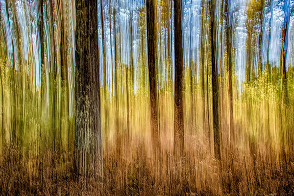 State Forrest Impressions Art | Michael Blanchard Inspirational Photography - Crossroads Gallery