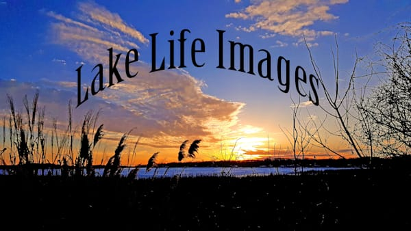 Not For Sale Using As A Logo. Photography Art | Lake LIfe Images
