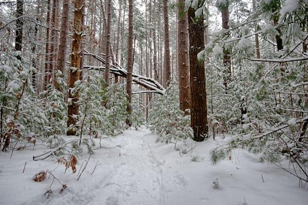 Snow, Path, Winter, New, Comfort