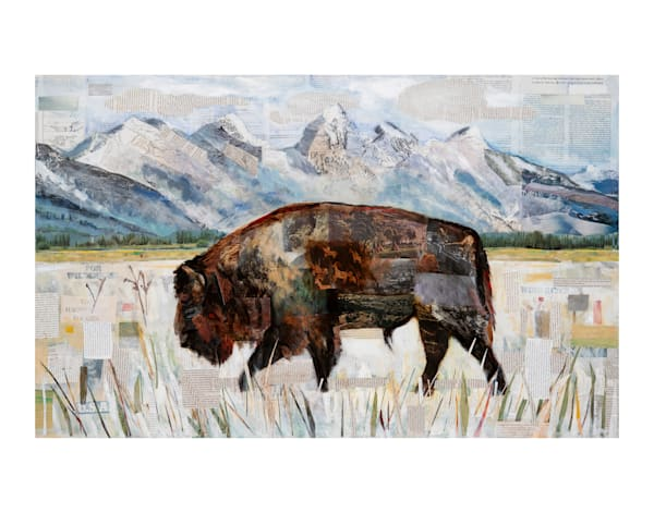 Rocky Mountain Bison