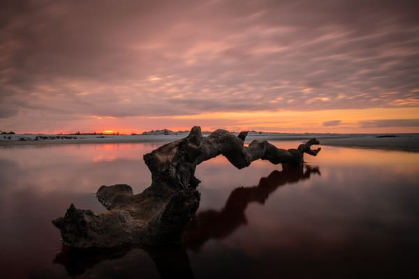 Reaching For Sunlight Art   Modus Photography