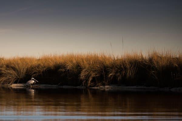 Brown Pelican Sunrise Art | Modus Photography