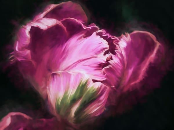 Floral Portraits