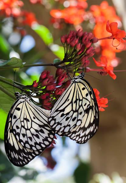 Paperkite Butterfly Art | Light Pixie Studio