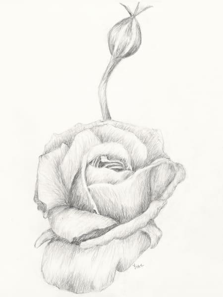 'frelinghuysen Arboretum' Rose Photography Art | Nature's Art Productions