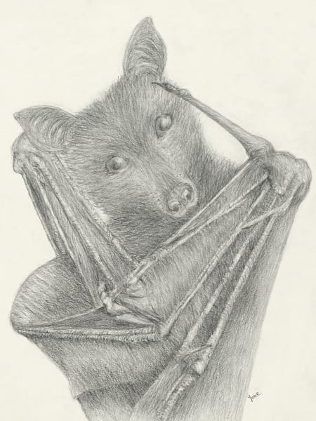 'flying Fox' Largest Bat Species Photography Art | Nature's Art Productions