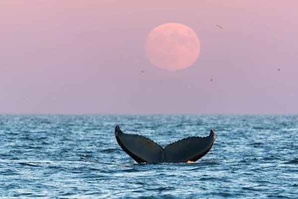 Stellwagen Moon Dive   9695 Art | Kjeld Mahoney Photography