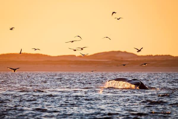 Sunset Dive   9768 2 Art | Kjeld Mahoney Photography