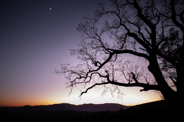 Last Light Photography Art | Sydney Croasmun Photography
