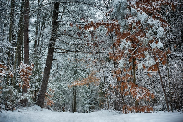 Frosted Winter Pathway Photograph