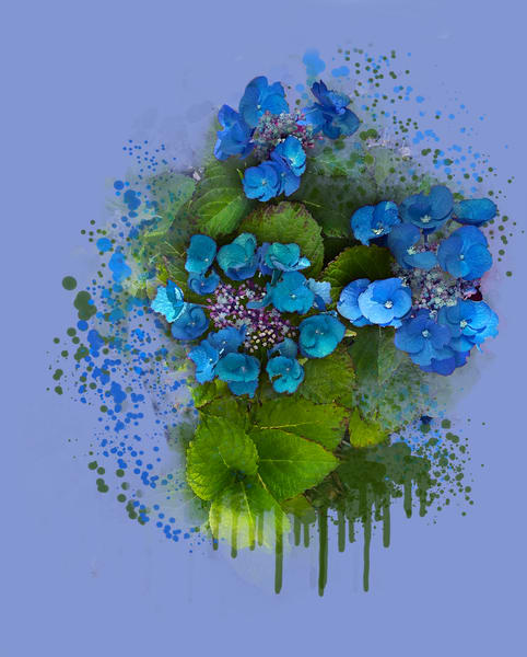 Juvenile Hydrangea (Inspired By Peter's Flowers) Art   Art from the Soul