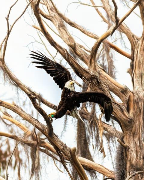 Eagle Ballet