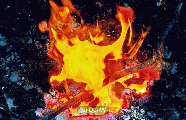 Wild Flame Dance
