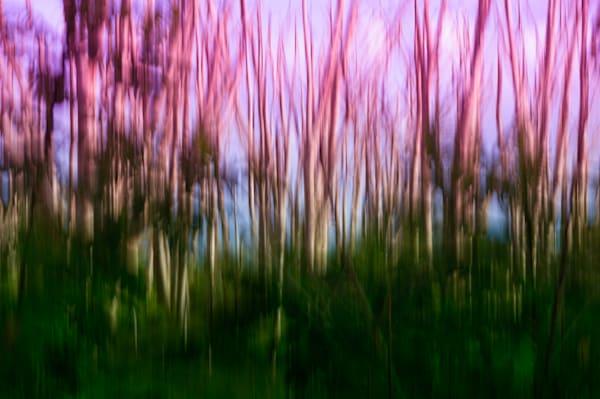 Albizia Ii Photography Art | Sheryl's Virtual Garden