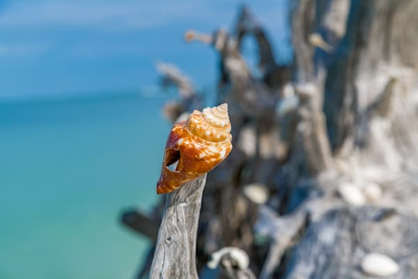 Seashells At The Seashore Photography Art | kramkranphoto