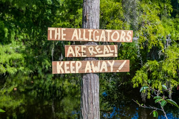 Keep Away, Not Today, Gator! Photography Art | kramkranphoto