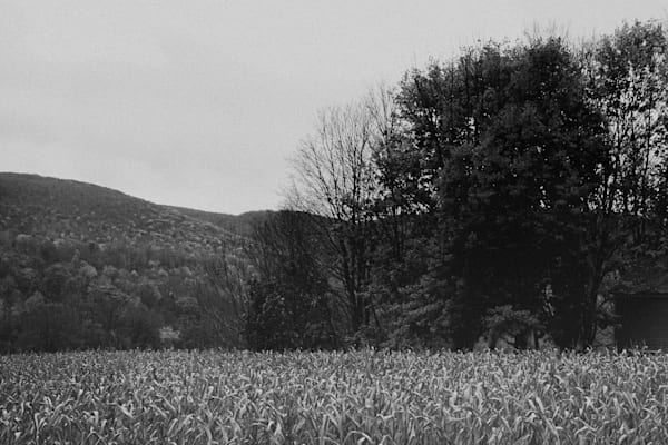 Corn In Monochrome Photography Art | LenaDi Photography LLC