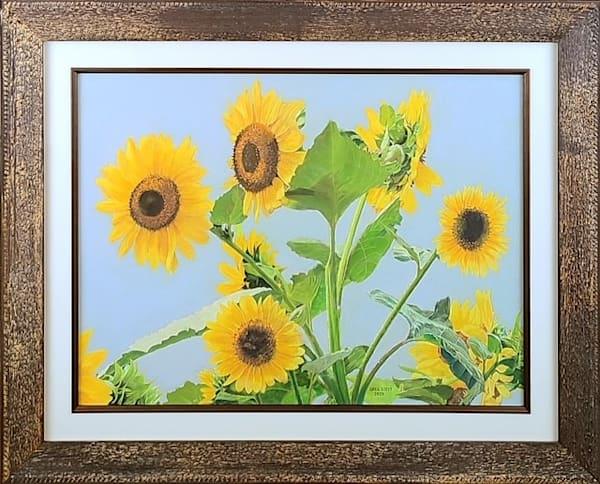Sunflowers Art   Greg Stett Art