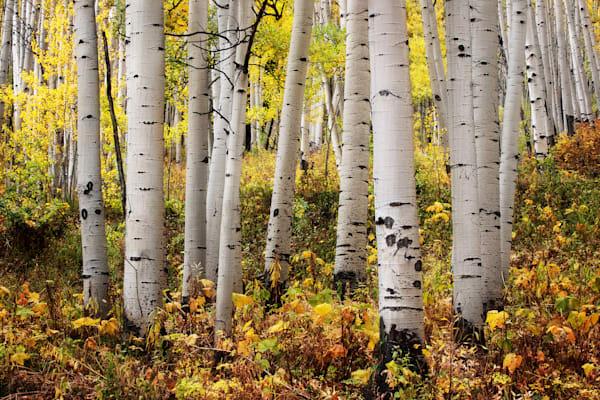 Fall Comes Photography Art | Ken Smith Gallery