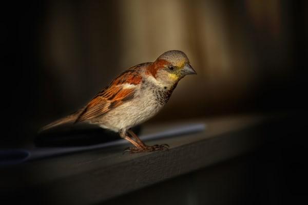 Birdie Art | Karen Hutton Fine Art