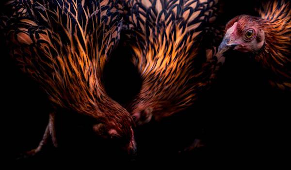 Danse De Poulet Art | Karen Hutton Fine Art
