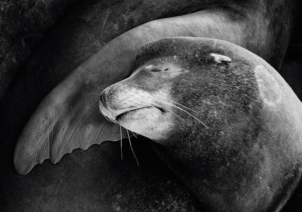 Finley Sealface Art | Karen Hutton Fine Art