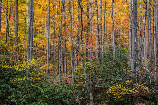 Seeing The Forest Through The Trees Photography Art | Ken Smith Gallery