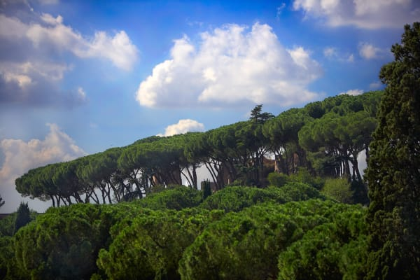 Shop for Rome, Italy Photographic Art | Among the Cedars II