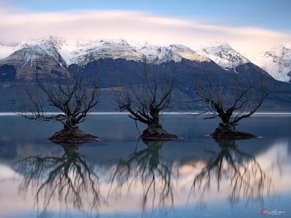 Three submerged willow trees in a mountain lake at sunrise