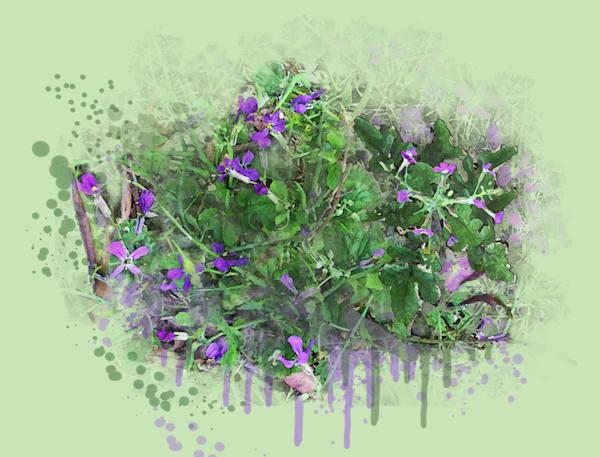 Wild Radish Flowers Art   Art from the Soul