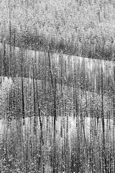 Seeking Simplicity   black & white images