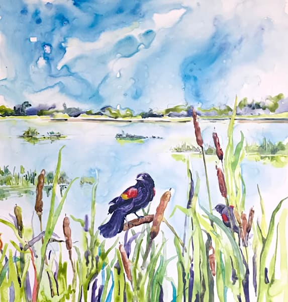 Red Winged Blackbird In The Reeds Art | Karen Bishop Artist