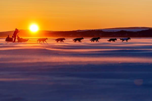 Iditarod & Mushing